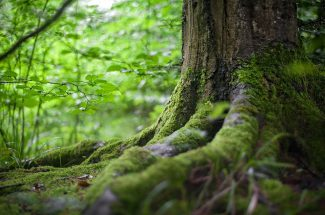 forest-2599720_960_720